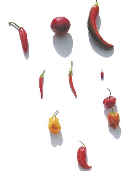illustration peppers