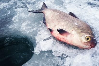Shad ice fishing hole
